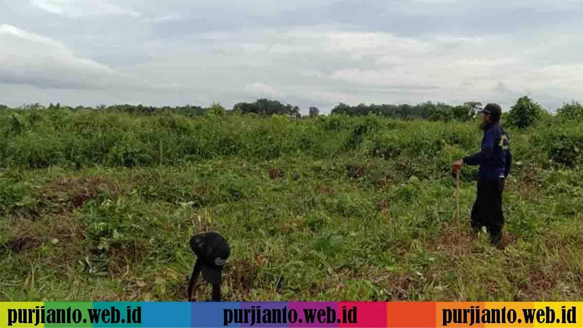 Melihat Suburnya Tanah Sangatta, Menjadi Peluang Usaha Pertanian dan juga Peternakan